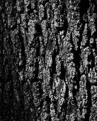 Some tree bark