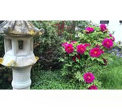 . . . . . #amazing #bloom #ip_blossoms #flora #flower #explore #flowermagic  #floweroftheday #flowerpower #flowers #9vega9 #ig_great_pics #fingerprintofgod #flowerslovers #flowersandmacro #fpog #flowersofinstagram #ig_color #instaflower  #followme #maryla