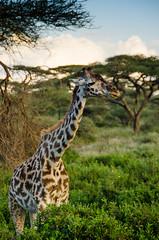 Tanzania-Masek-SafariDrive-47
