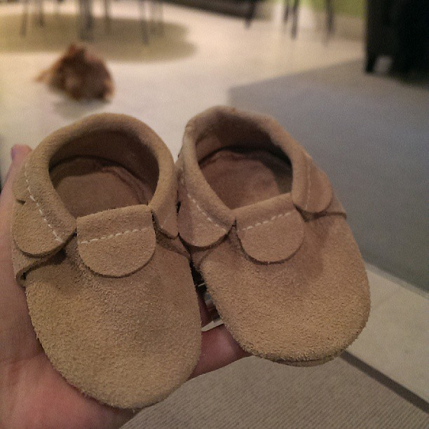 New shoes for baby. Also pictured: the bad dog who chewed the left shoe (thankfully not beyond saving)