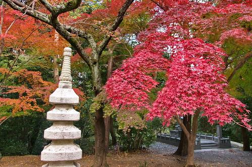 【写真】2012 紅葉 : 光明寺/2020-11-11/IMGP6493