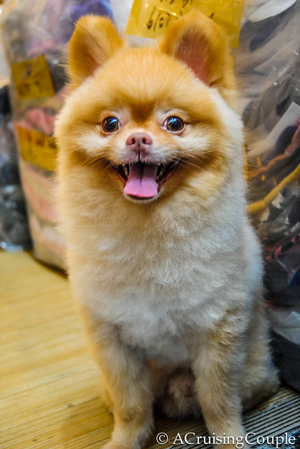 16 Cute Puppies From Taiwan