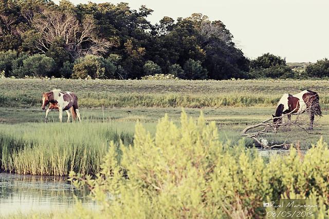 how to catch wimpod on poni island