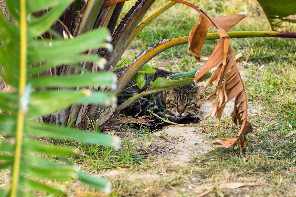 2013-Spain-Benidorm-CatsParadise-006