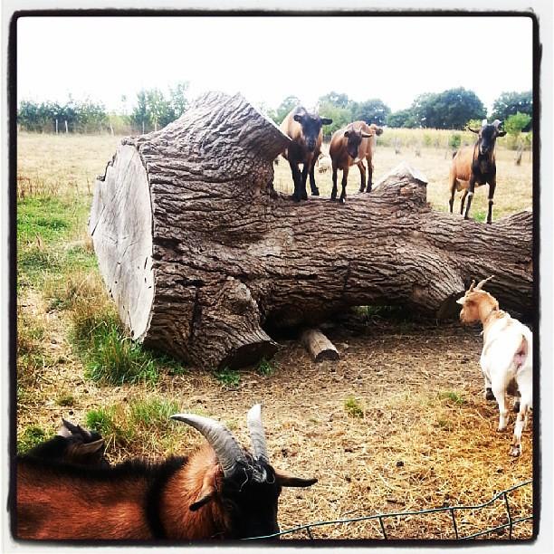 """♣ on nourrit les """"mée"""" comme dit néné ♣ #blog #blogueuse #ourlittlefamily #france #campingalaferme"""
