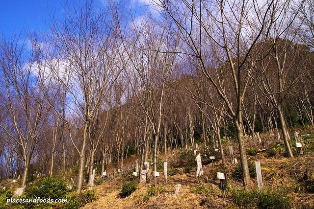 Kiyomizudera (清水寺)Temple little forest