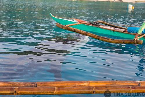 Whale Shark Swimming Philippines