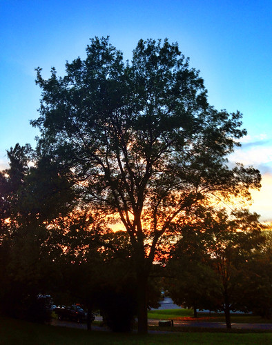 sunset tree manlius photo365