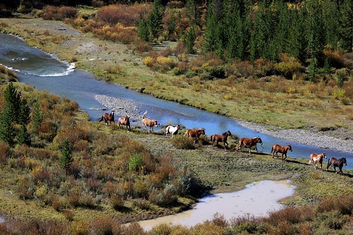 IMG_1913_Horses_at_Tie_Hack_Memorial_Between_Dubois_and_Tetons