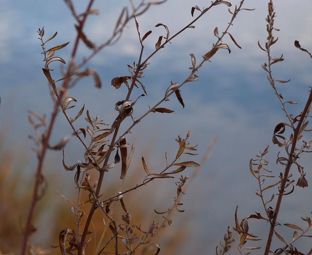weeds_november