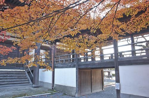 【写真】2013 紅葉 : 妙顕寺/2020-11-01/IMGP4153