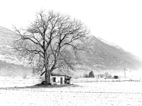 The tree and the house by Manuel Buetti