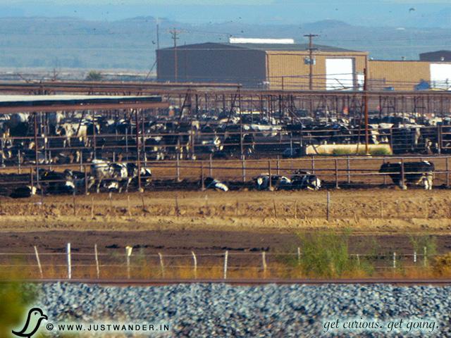 Roadtrip: I-8E: Cattle Ranch Smell