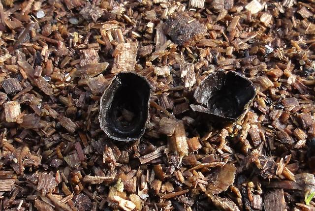 Mystery Fungi II