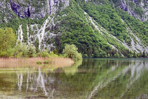 lake reflection tree green landscape see slovenia slowenien grün landschaft spiegelung baum jezero bohinje 2013 sloveniji dorenawm nex7 renatedodell