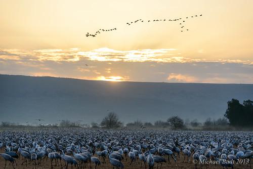 birds animals israel hula north galilee mideast naturelandscape emekhulah