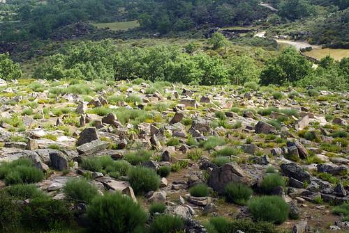 Campo de Piedras Hincadas (Field of Stones kneeling)