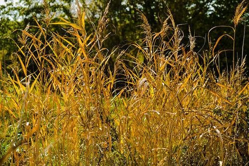 birthday project denmark flickr autumncolours fødselsdag danmark projekt lightroom norresundby efterårsfarver nrsundby northdenmarkregion poulwernerdam