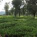 Kairbetta garden 2