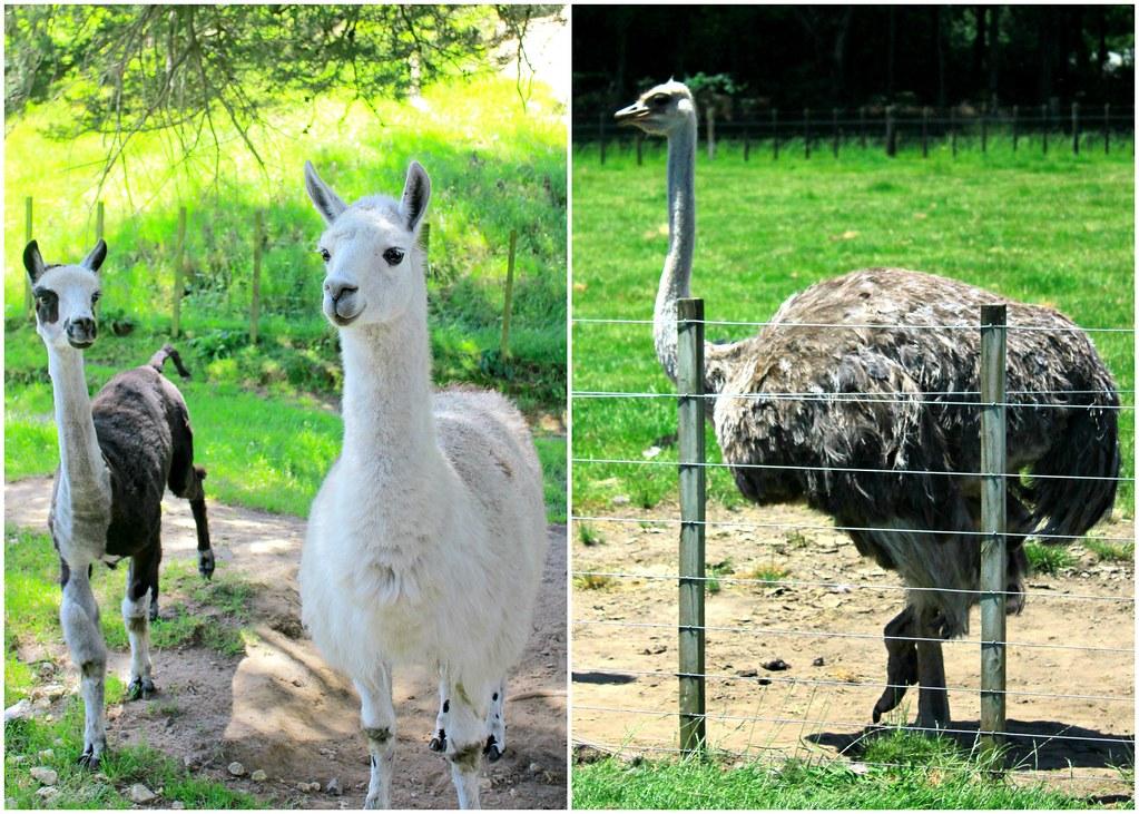 agrodome-farm-animals