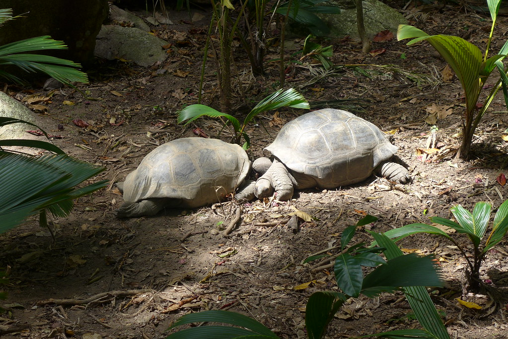 Pralin-Seychelles