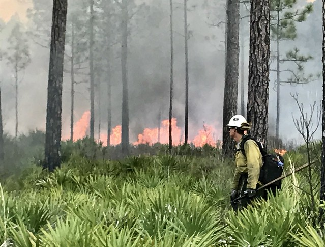 Firefighter in the brush at Okefenokee NWR