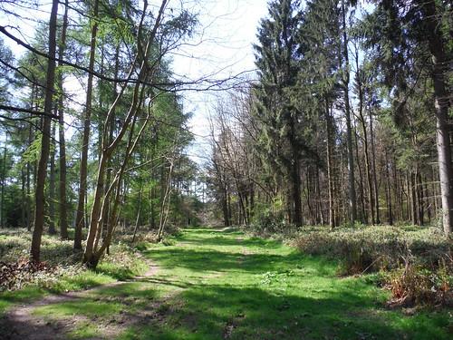 Knighton's Hill Wood