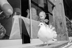 Il bambino e la colomba