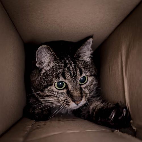 Kiza in the Box