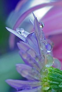 delicate drops