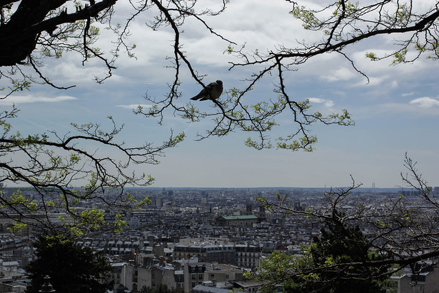 Fat pigeon and a beautiful view of Paris