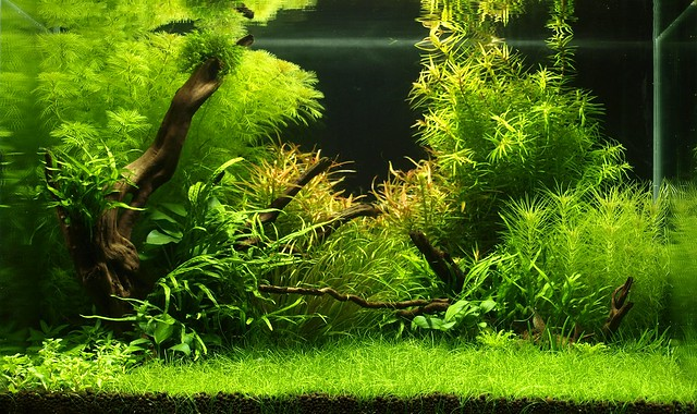 The other planet aquascaping world forum for Aquarium 96l