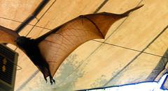 art(0.0), branch(0.0), leaf(0.0), wood(0.0), horn(0.0), wing(1.0), bat(1.0),