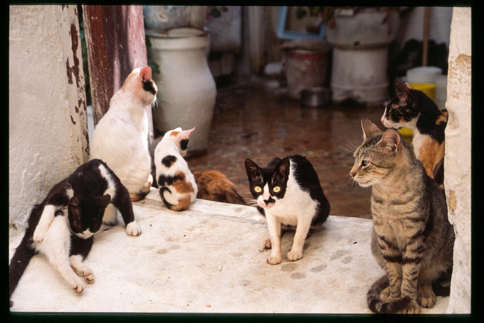 Festival de musique de Fès - Les chats de la Medina