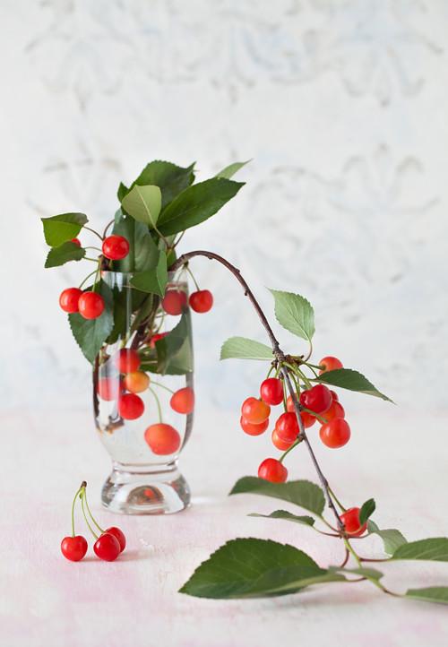 Sour Cherry 1