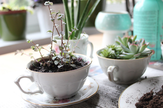 DIY Teacup Planter