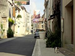 Fontenay-le-Comte. Chat comme seul badaud rue des Loges