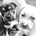 Puppies by AlexRuz