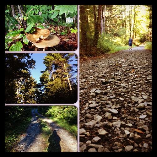 Morning walk #3 #ilovethecabin