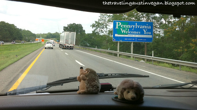 Hedgehogs In Pennsylvania