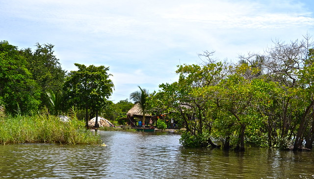 Life on Mangrove Canal - Monterrico, Guatemala
