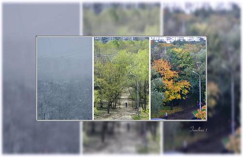 trees collage flora moscow memories topshots flickraward photosandcalendar natureselegantshots naturethroughthelens sonydscs730 theoriginalgoldseal mygearandme ipiccy