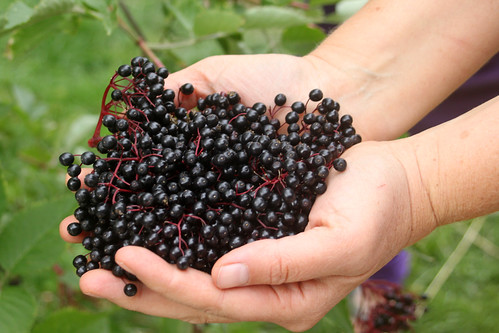 Sarah's Elderberries