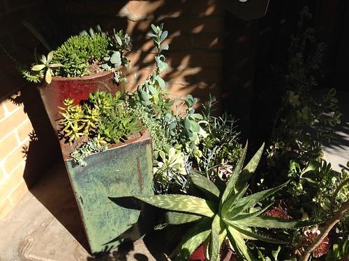 succulents, Big Sur IMG_0674