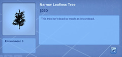 Narrow Leafless Tree