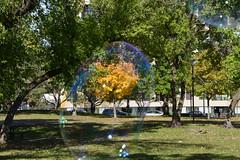 Bubbles #3