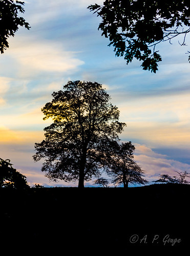 sunset tree silhouette adobe blueridgeparkway boon adobelightroom