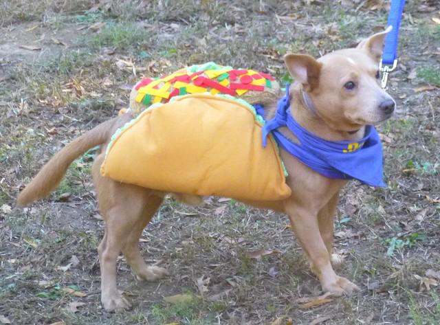 Taco Dog Costume Large