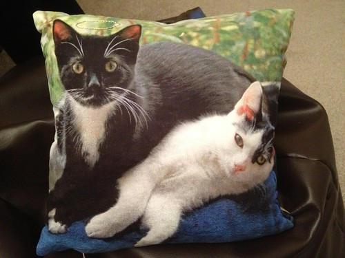 Pussy cat pillow