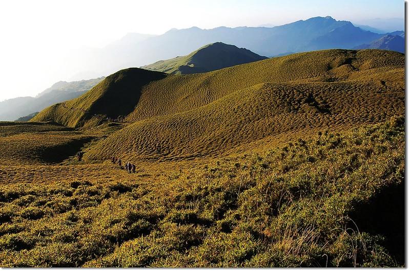 奇萊南峰箭竹坡 5